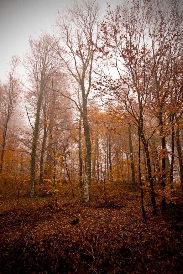 Η φθινοπωρινή παλέτα - Ι. Κάντας/WWF Ελλάς