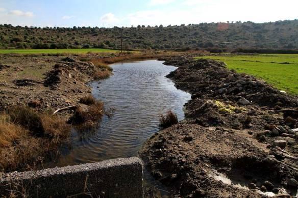 Η υγροτοπική βλάστηση έχει «αντικατασταθεί» από καλλιέργειες - Photo: Λ. Κάκαλης