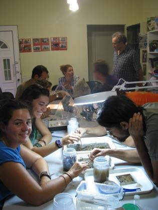 Εικόνα 1. Ο πρώτος διαχωρισμός ατόμων της οικογένειας Syrphidae από τον υπόλοιπο όγκο του βιολογικού υλικού έχει ξεκινήσει