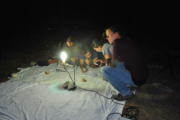 Εικόνα 5. Φως στο δάσος/ Μ. Τουσίδου