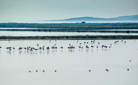 Η Αλυκή Μυτιλήνης ταξιδεύει κι αυτή στην Ουρουγουάη. ©Καλούστ Παραγκαμιάν/WWF Ελλάς