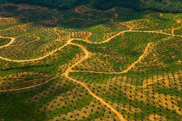 Εδώ ήταν τροπικό δάσος. Τώρα είναι φυτεία φοινικέλαιου. Βόρνεο, Μαλαισία. © naturepl.com / Juan Carlos Munoz / WWF